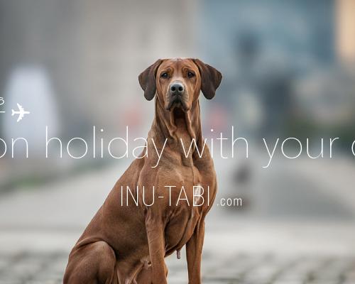 株式会社犬旅 様